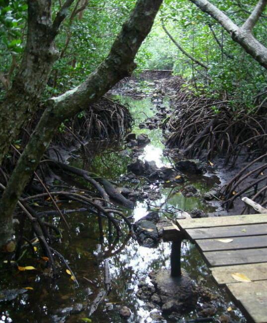 mangrovenwälder fauna und flora